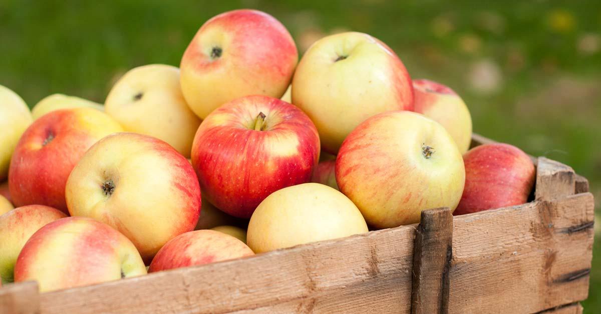 Sådan får du mest ud af æblerne